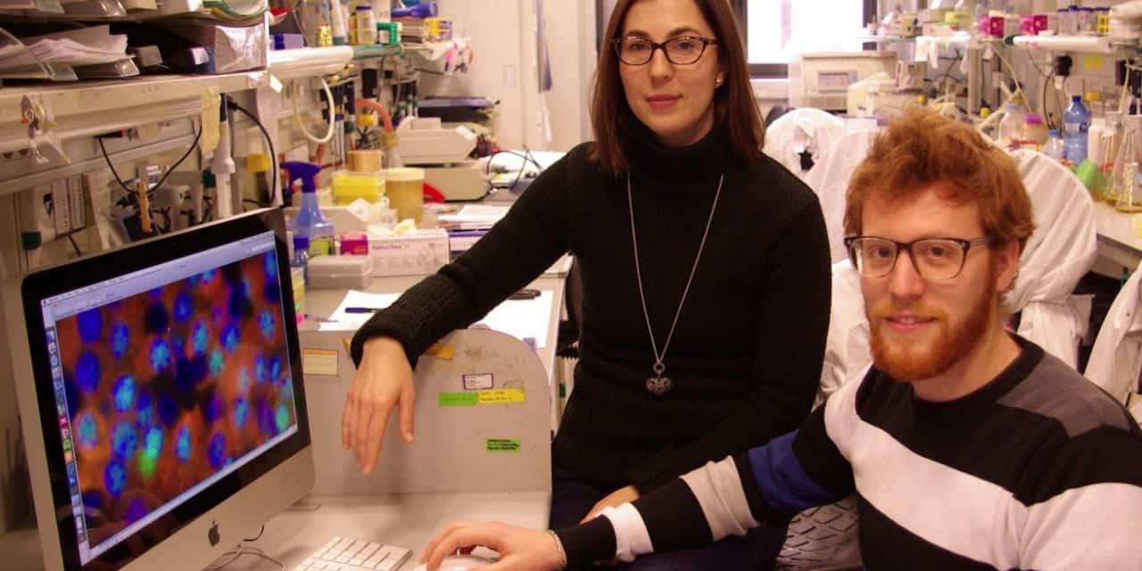 Avances en el estudio de la diabetes a nivel molecular