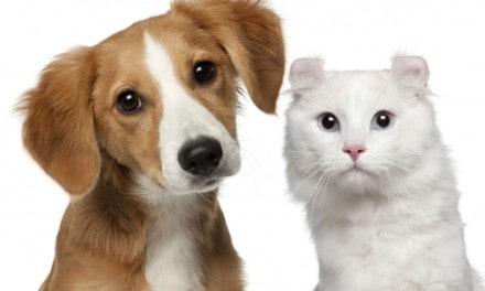 Diabetes en perros y gatos