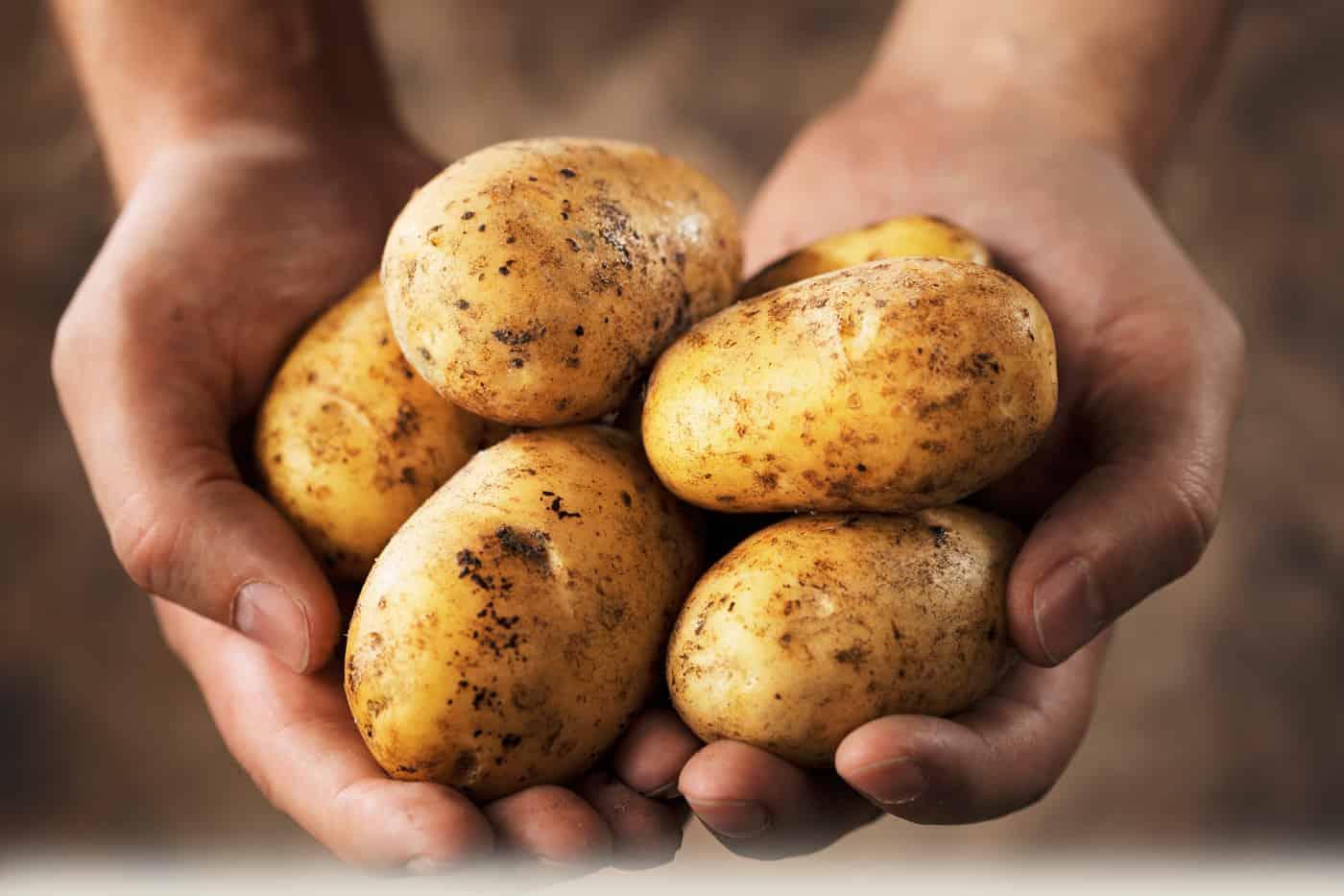 patatas y diabetes 2