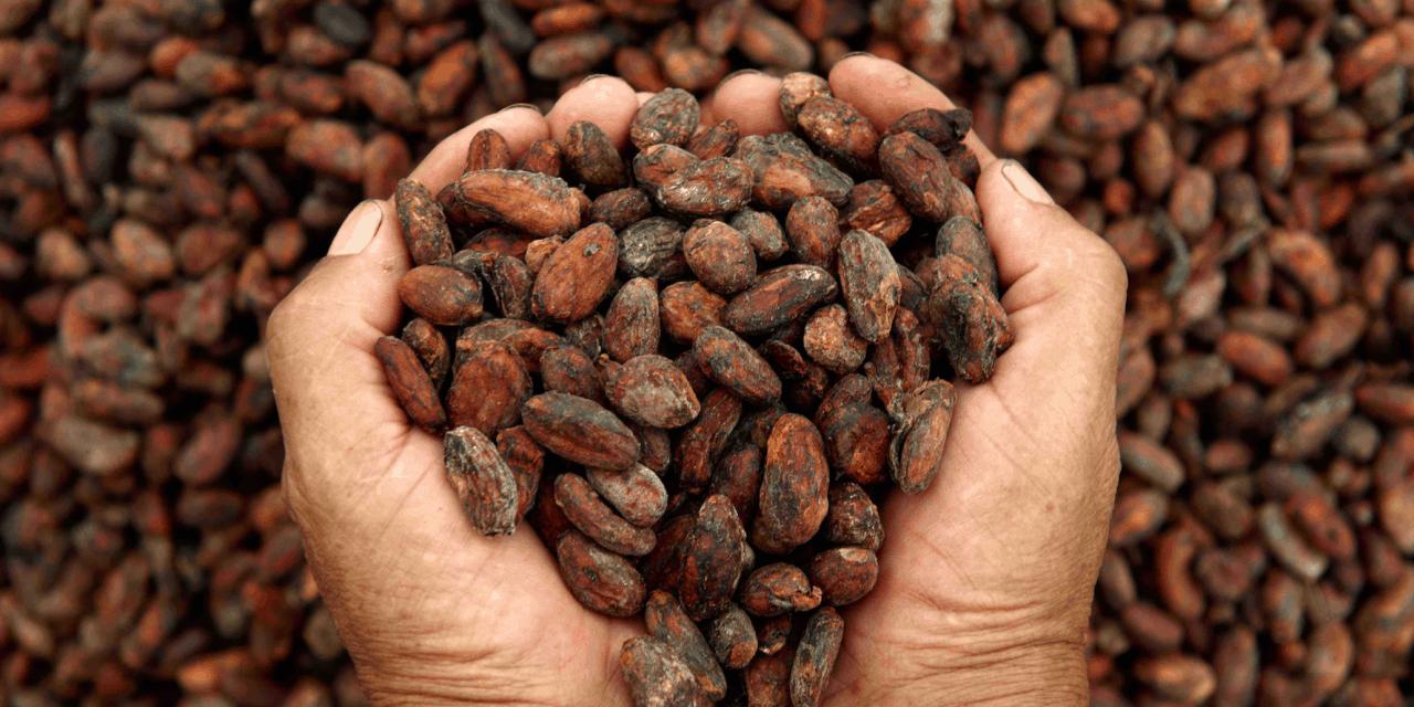 La epicatequina del cacao contra la enfermedad coronaria
