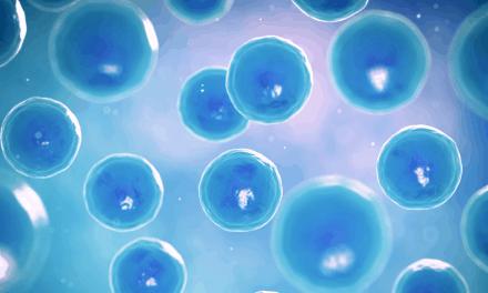 Investigan cómo las células inmunitarias atacan al páncreas