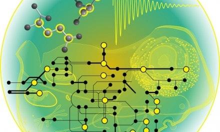 Nueva metodología permite rápidamente los flujos del metabolismo