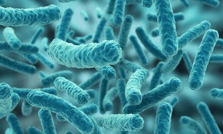 Demuestran que la metformina mejora las bacterias intestinales buenas