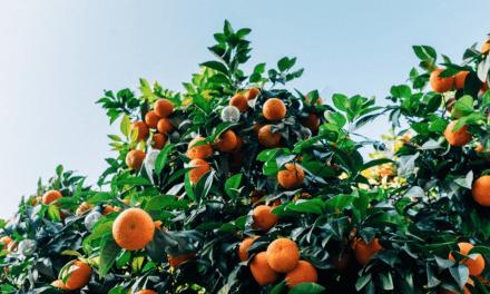 El consumo de frutas y hortalizas asignatura pendiente en España