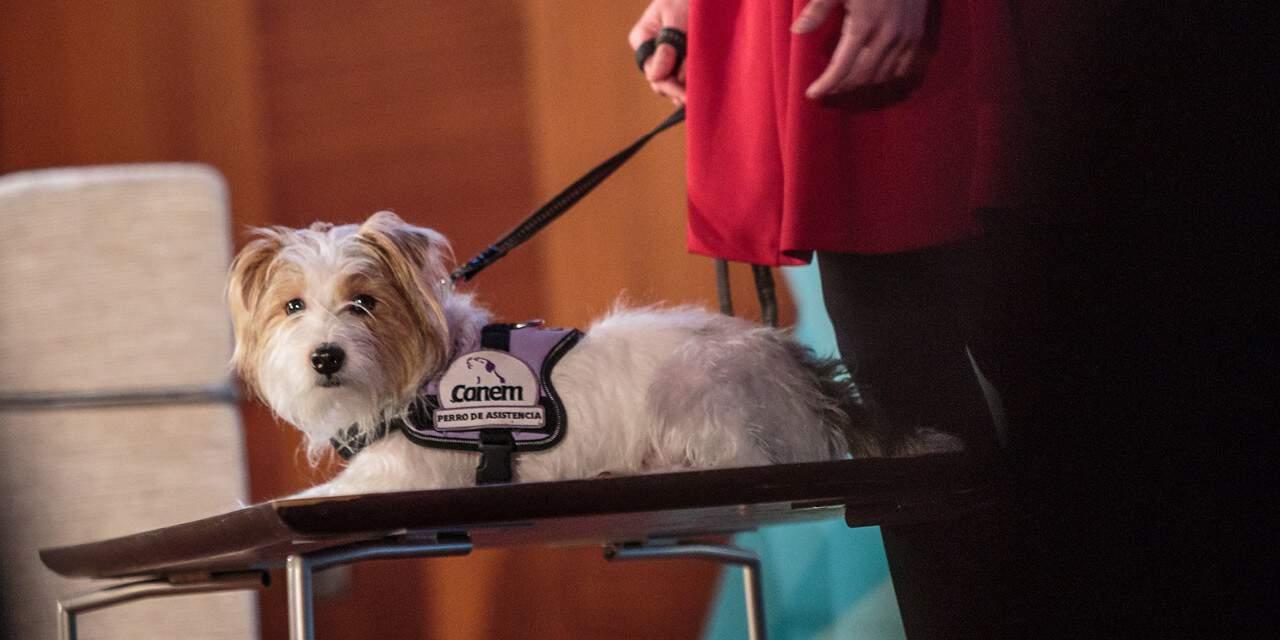Actualizan la ley de perros de asistencia pensando en personas con diabetes