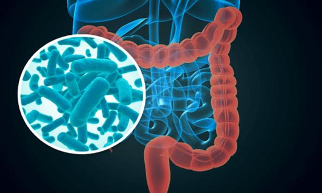 Relacionan microbiota intestinal y riesgo de diabetes tipo 1