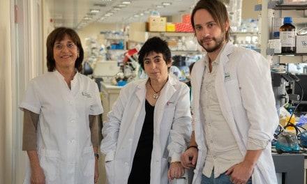 Descubren nuevo mecanismo por el que la obesidad provoca resistencia a la insulina